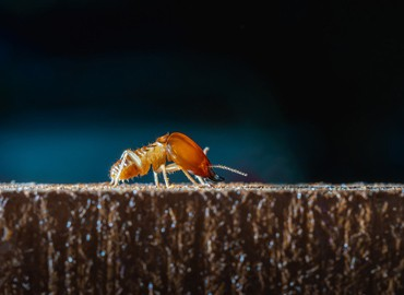 Why Use Termite-Proof Furniture? - CenturyPly
